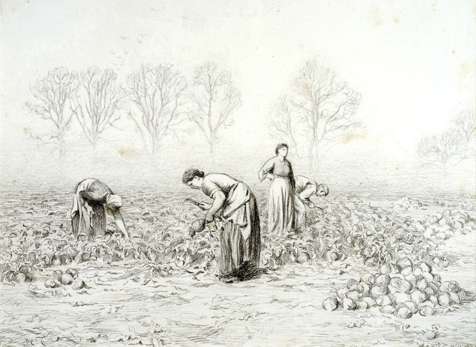 Turnip pulling, Warham (Gypsies in a turnip field)