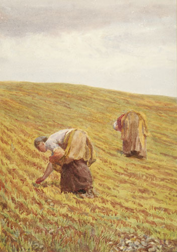 Picking Stones, Warham (Jim Powell's farm)